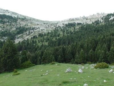 Nou màxim altitudinal per la granota verda (Pelophylax perezi) a Catalunya